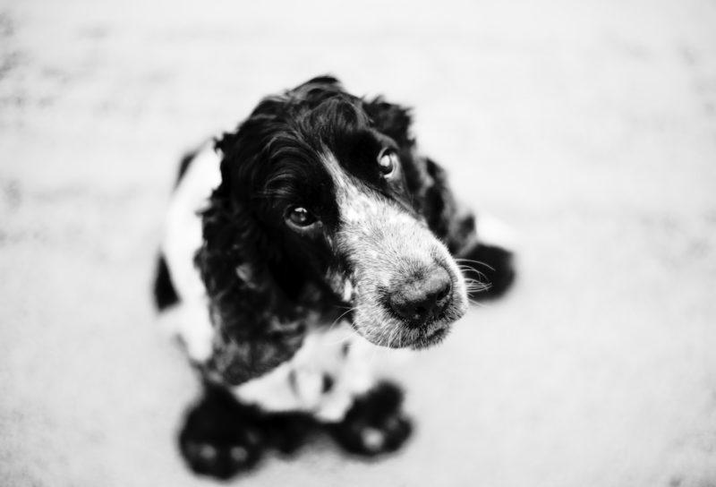 DSC_3588-copia-800x544 Noticias de perros - Inicio