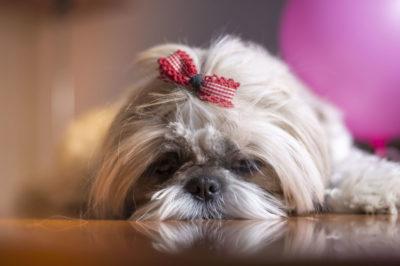 DSC_5554-2-400x266 Noticias de perros - Inicio