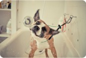 boxer baño