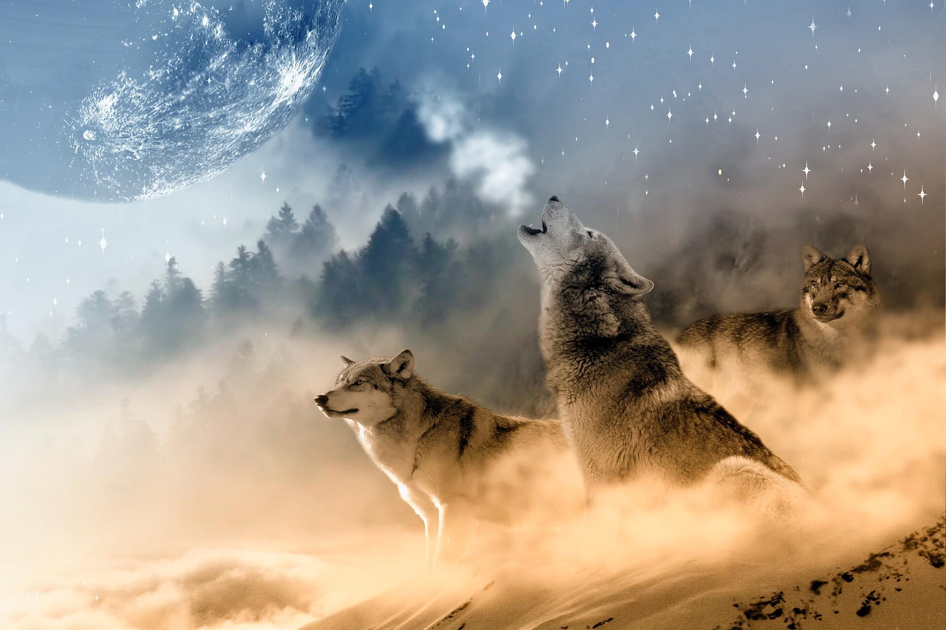 lobos.noticiasdeperros.com