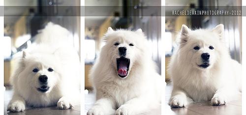 Foto cortesía de Rachel Deakin http://www.flickr.com/photos/rdeakin/