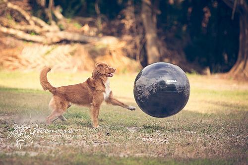 Foto cortesía de: Kelly Hayes http://www.flickr.com/photos/offshorecbr/