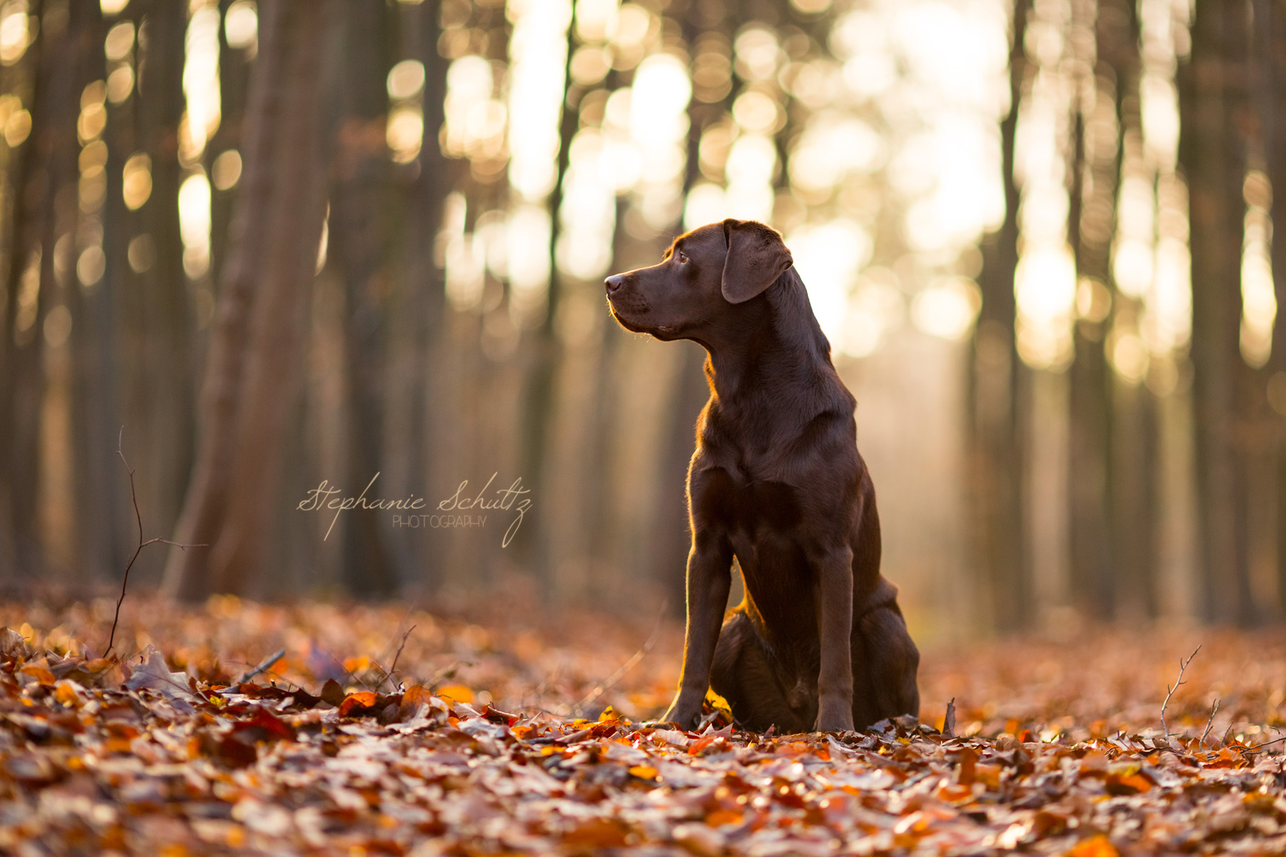 labradorretriever.noticiasdeperros.com