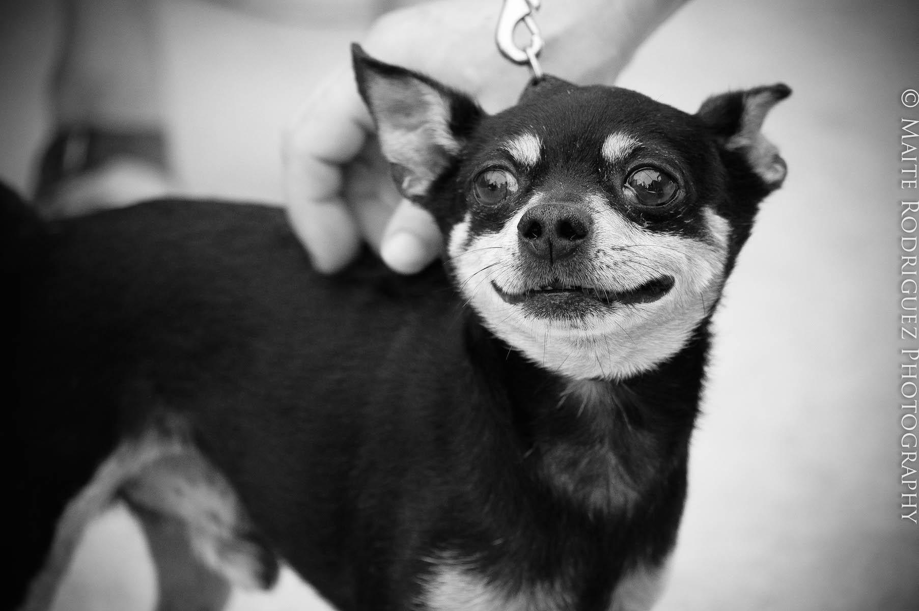Hongos de la piel en perros