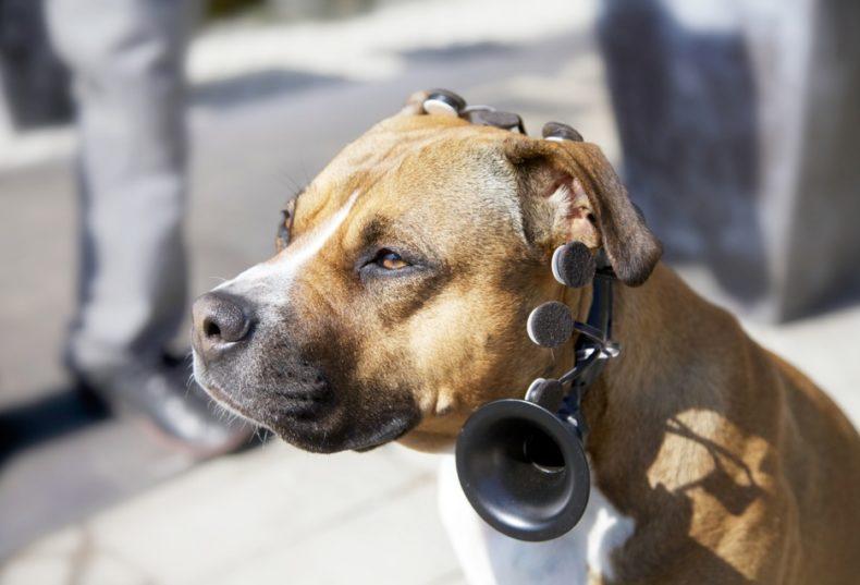 IMG_85731-790x537 Noticias de perros - Inicio