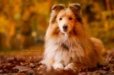 vicky-d-386x254 Noticias de perros - Inicio