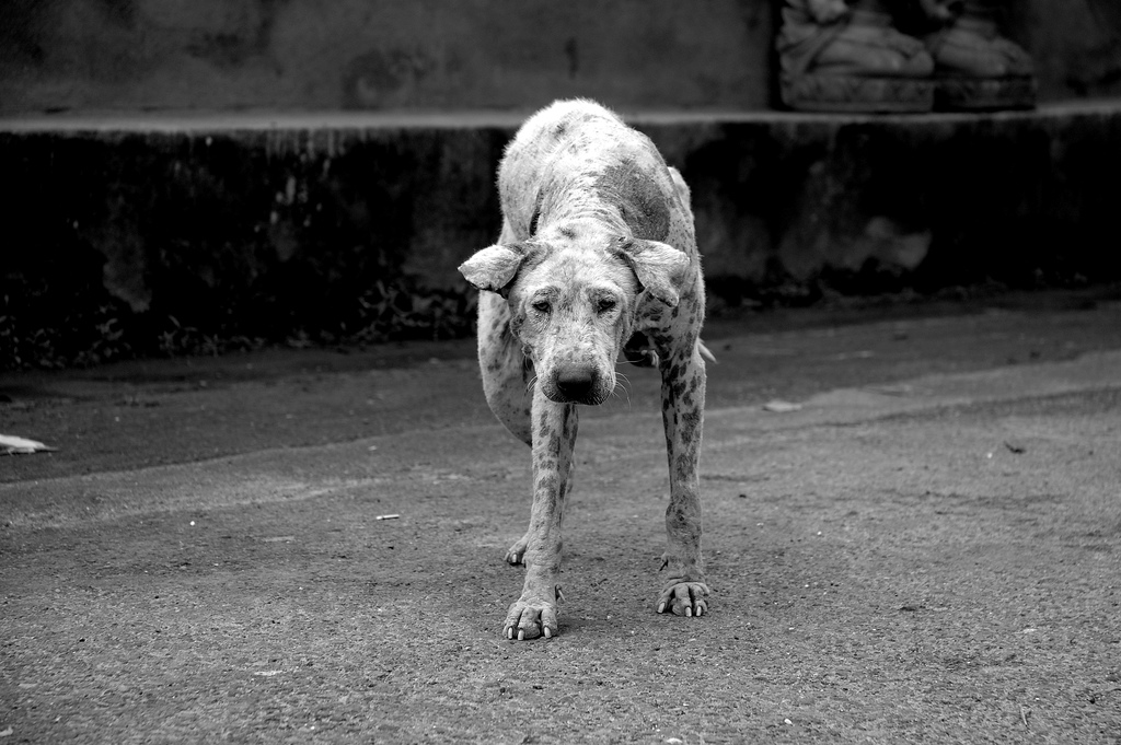 perros Bali