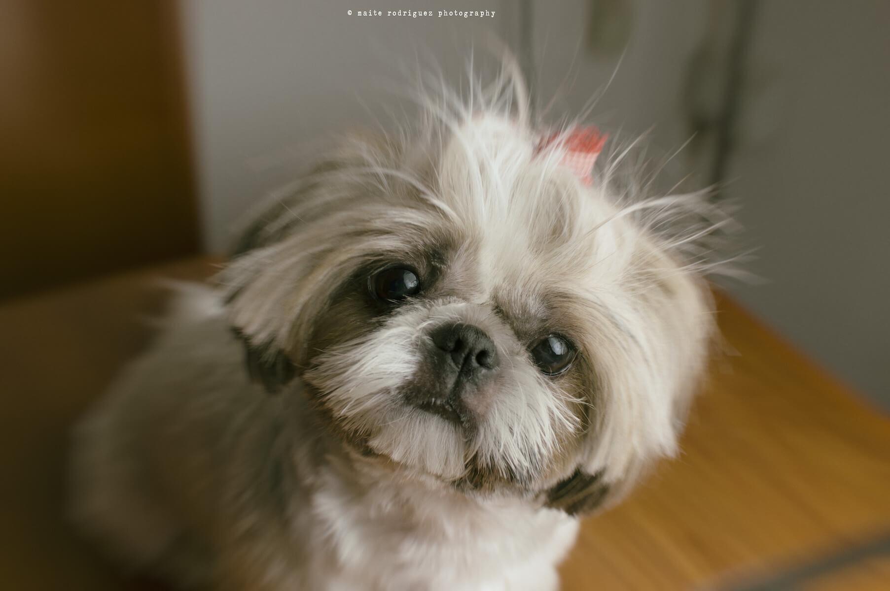 DSC_2704-copia Los 13 secretos que tu perro sabe de ti