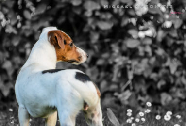 mickael-assonitis-383x260 Noticias de perros - Inicio