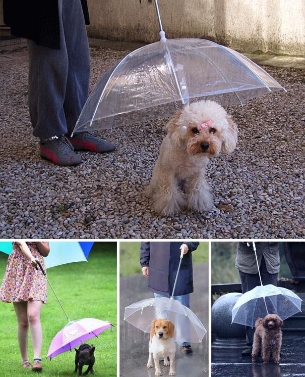 paraguas caninos