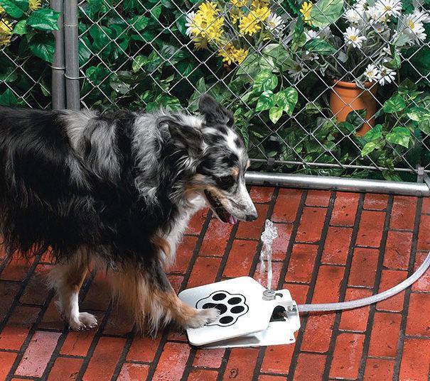 inventions-for-dog-lovers-11-790x537 Noticias de perros - Inicio