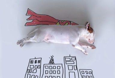 jimmy-choo-bull-terrier-illustrations-rafael-mantesso