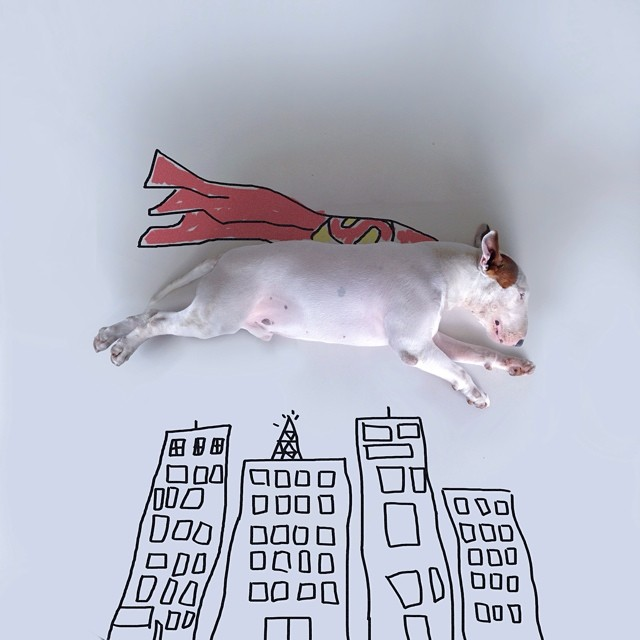 jimmy-choo-bull-terrier-illustrations-rafael-mantesso