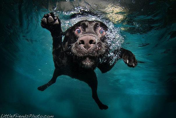 underwater-dogs-seth-casteel-9-790x537 Noticias de perros - Inicio