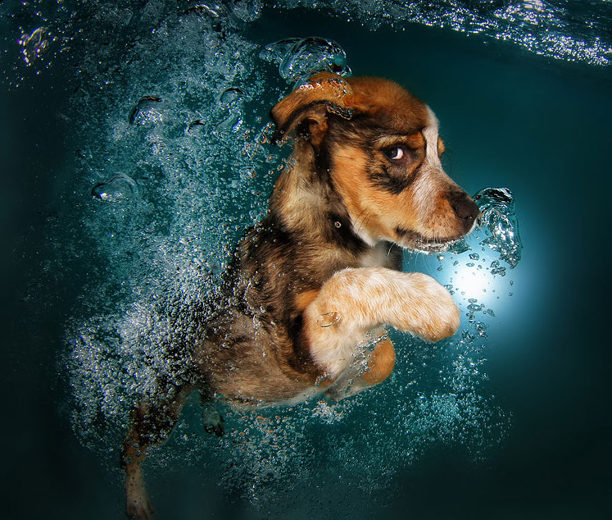underwater-puppy-photography-seth-casteel-4