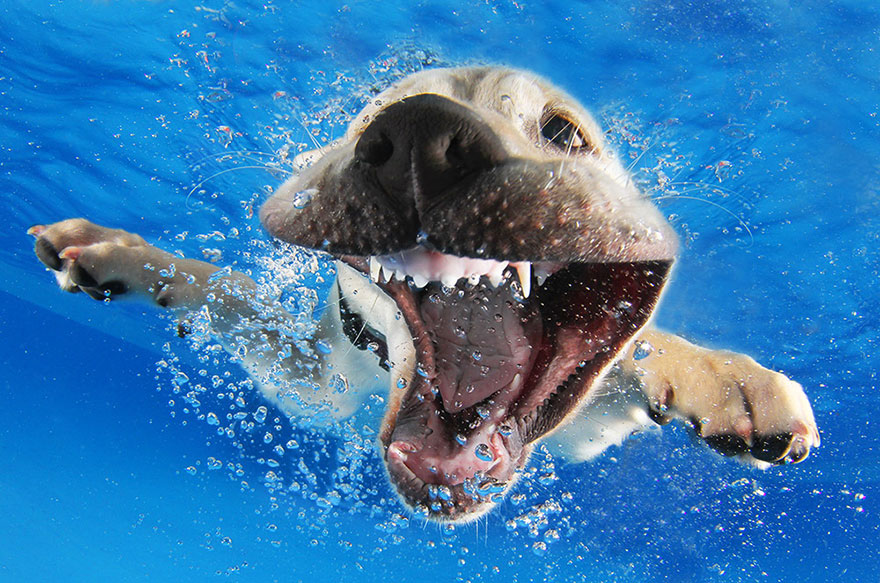 underwater-puppy-photography-seth-casteel-8