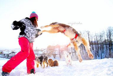 Anja-Troha-383x260 Noticias de perros - Inicio