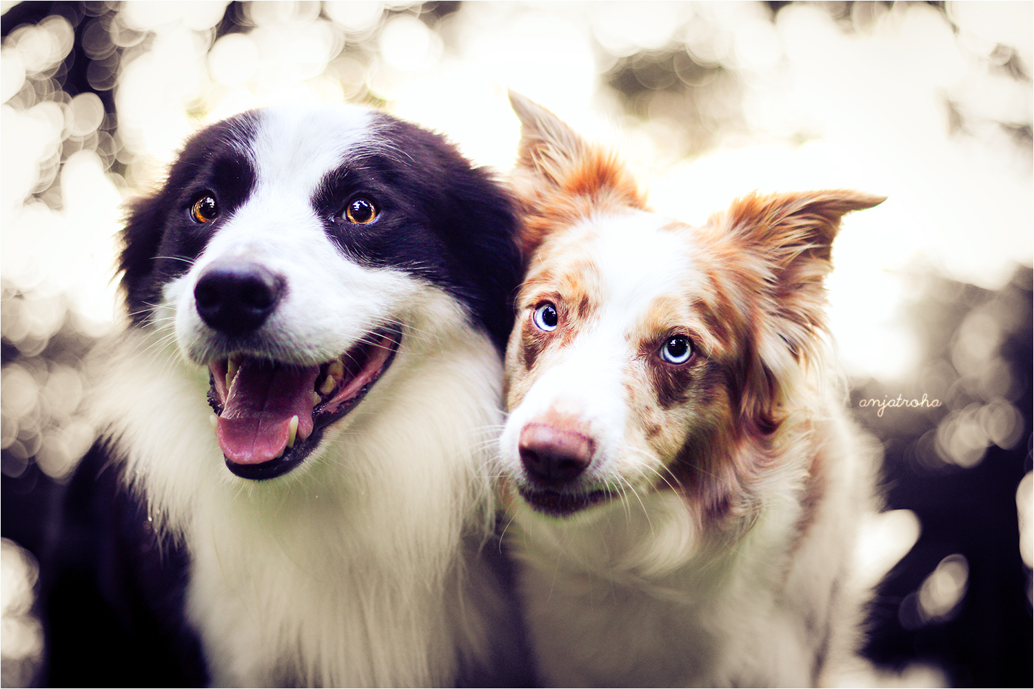 bordercollie.noticiasdeperros.com