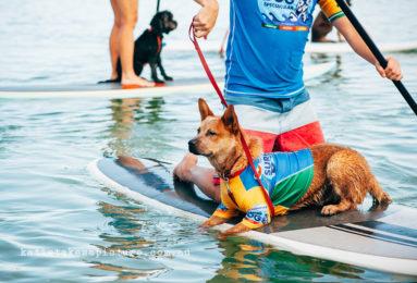 katietakesapicture-383x260 Noticias de perros - Inicio