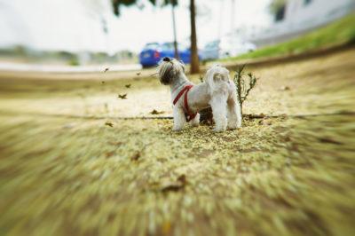 DSC_7753-2-400x266 Noticias de perros - Inicio