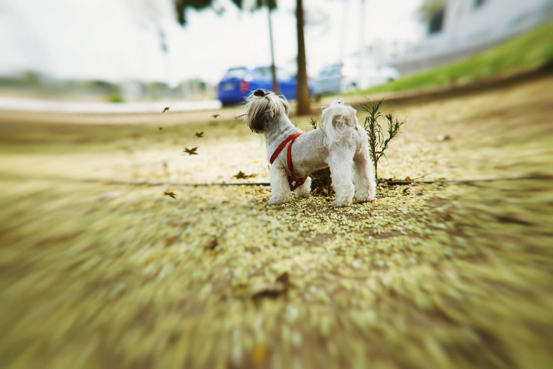 DSC_7753-2 Noticias de perros - Inicio