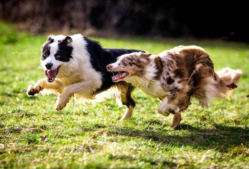 anjahtroha-800x544 Noticias de perros - Inicio
