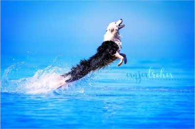 border-collie-noticias-de-perros.com_-400x266 Noticias de perros - Inicio